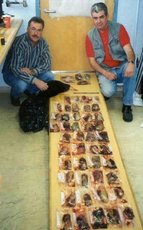 CO's Couillard and Anderson with black market bear gall bladders